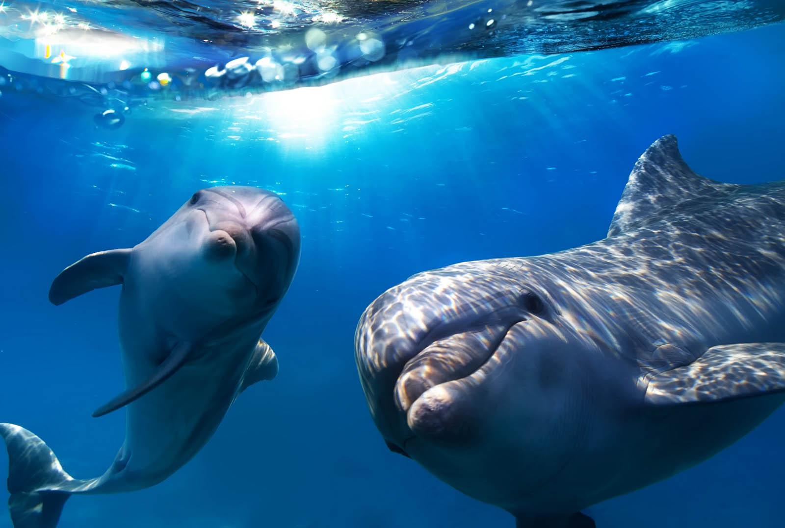 Скачать звуки дельфинов китов
